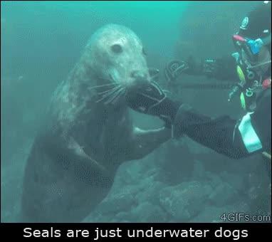 Enlace a Las focas son solo perritos marinos