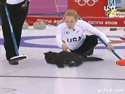 Enlace a El deporte siempre es mejor con gatos