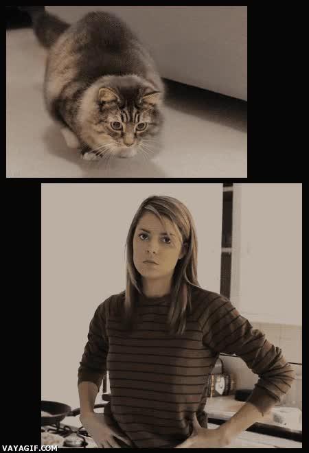 Enlace a Ya conocemos a la dueña del gato de movimiento hipnótico