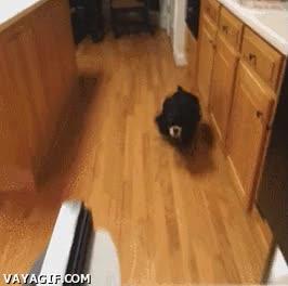 Enlace a ¿Acabo de escuchar abrirse la nevera?