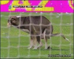 Enlace a Perro se cuela en el campo de futbol y caga en mitad del césped
