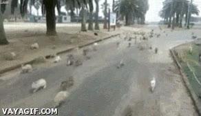 Enlace a Esto supera a los abuelos del parque que alimentan palomas