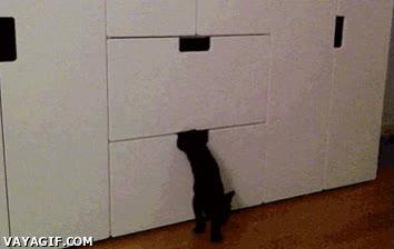 Enlace a Este gato se escurre como una sombra