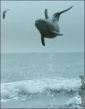 Enlace a El salto de un delfín en alta mar, ellos también saben divertirse