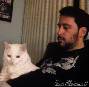 Enlace a El gato que no le gustaba ser observado cuando bailaba