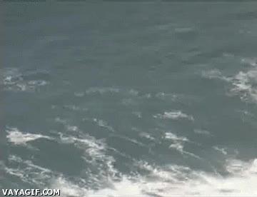 Enlace a Delfines surferos