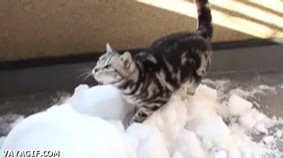 Enlace a ¿Quién dice que los gatos no disfrutan en la nieve?
