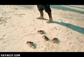 Enlace a Paseando a mis cangrejos
