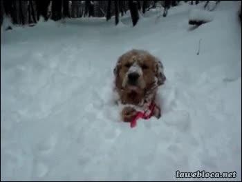 Enlace a Así nacen los perros rusos