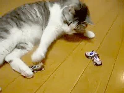 Enlace a A todo el mundo le gusta jugar con cochecitos de juguete