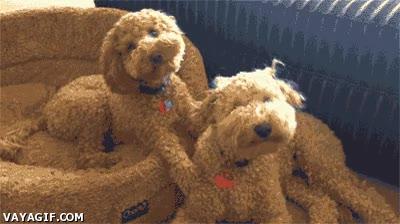 Enlace a Creo que estos perros están hechos del mismo material que su cama