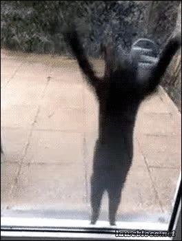 Enlace a ¡Dejadme entrar! ¡Dejadme entrar! ¡Dejadme entrar! Vale, pues no...