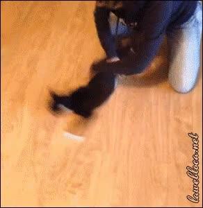 Enlace a ¿Los gatos se pueden marear?