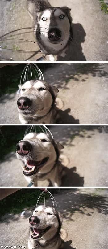 Enlace a Los perros disfrutan con todo
