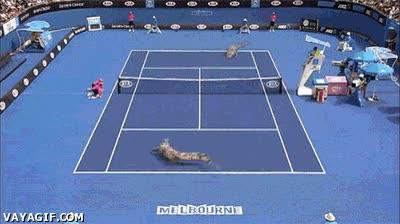 Enlace a Mientras tanto, en un partido de tenis en Australia...