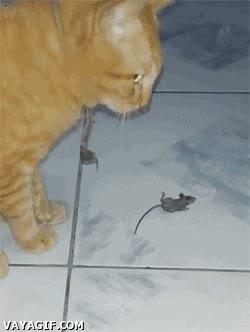 Enlace a Mira humano, soy el mejor cazador de ratones... Eh, espera, ¿dónde vas?