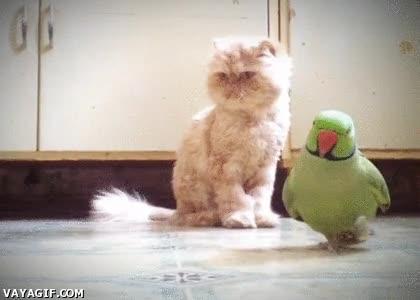 Enlace a Un momento, ¿le quieres hacer una foto sólo al gato? ¿Y a mí qué, eh?