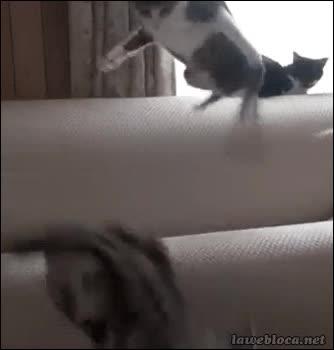 Enlace a ¡Que te quites de mi sitio te he dicho!