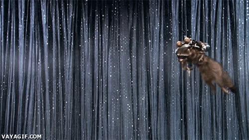 Enlace a El mapache volador
