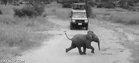 Enlace a Lo típico que se te puede cruzar por la carretera