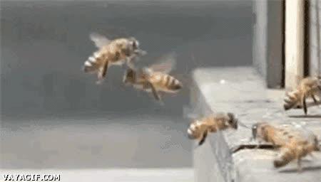 Enlace a Un choque de abejas dirigido por Michael Bay