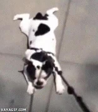 Enlace a No quiero ir al veterinario