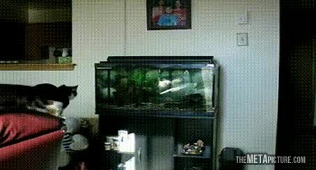Enlace a ¿Alguien me explica por qué no puedo agarrar esos peces?