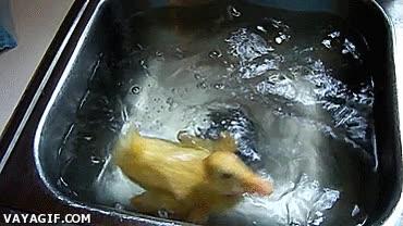 Enlace a ¿Sabes la expresión ''como un pato en el agua''? Pues eso...