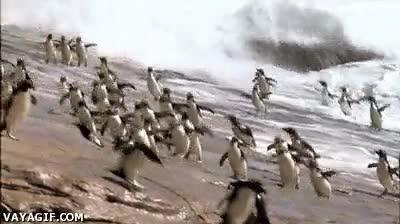 Enlace a ¡Socorro, huyamos todos juntos de la forma más patosa posible!