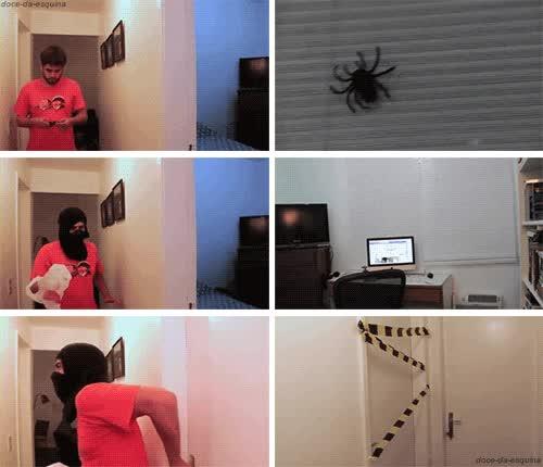 Enlace a Cuándo ves una araña y luego la pierdes de vista