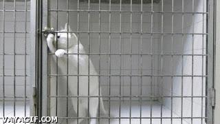 Enlace a El gato escapista