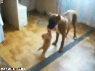 Enlace a Gatito intentando robar carne a un perro