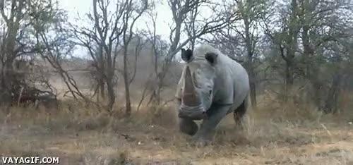 Enlace a Esto es lo último que te gustaría encontrarte en un safari