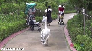 Enlace a ¡Hora de desalojar el zoológico, venga, todos fuera!