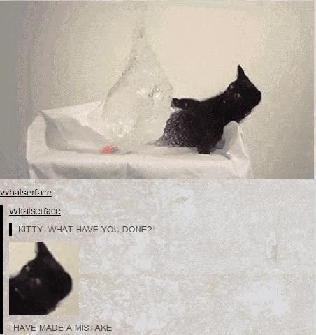 Enlace a El rostro del pánico felino