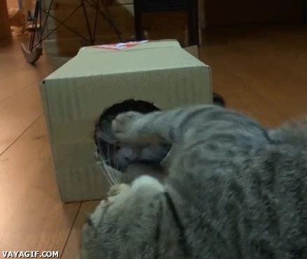 Enlace a Una caja de cartón, la protección perfecta