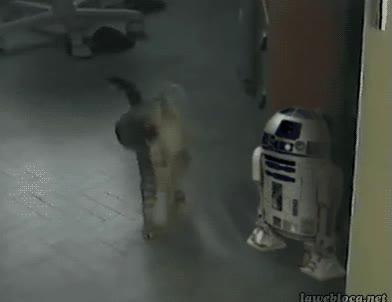 Enlace a Creo que este gato está a las órdenes del Imperio...