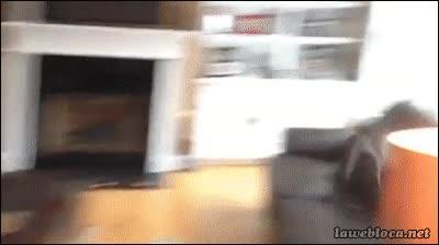Enlace a El Ussain Bolt de los perros