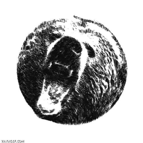 Enlace a El oso pardo en 3D