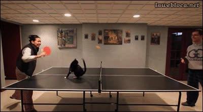 Enlace a A los gatos también les gusta el ping-pong