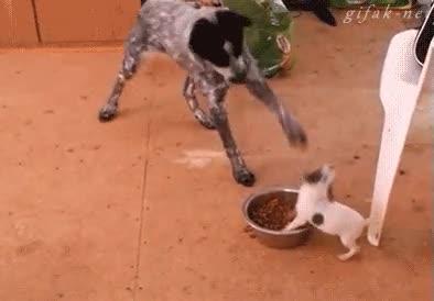 Enlace a ¡Ni se te ocurra tocar mi comida!