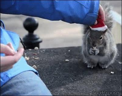 Enlace a Ponme los gorritos estúpidos que quieras, pero no dejes de darme de comer