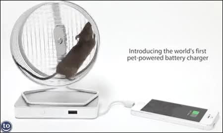Enlace a Sácale un uso práctico a la rueda de tu mascota