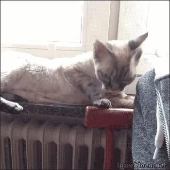 Enlace a Calcular puntos de apoyo no es el punto fuerte de este gato