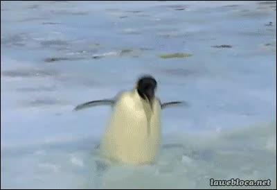 Enlace a Los pingüinos también tienen sus días malos