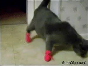 Enlace a Gato con guantes no caza ratones, ni caminar normal tampoco...
