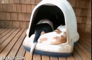 Enlace a Caseta de perro sin fondo