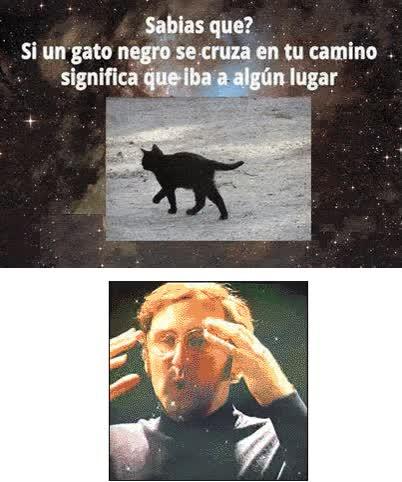 Enlace a El significado de cuando se te cruza un gato negro