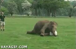 Enlace a Algunos elefantes saben jugar a fútbol, no todos...
