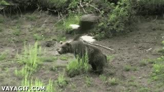Enlace a No sé si están jugando al ''Tú la llevas'' o el águila le acaba de dar una colleja al oso